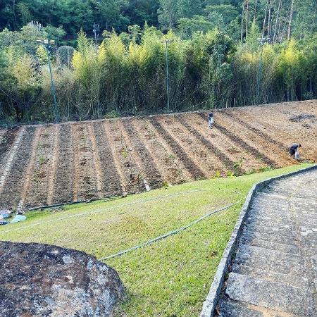 Agrofloresta e o caminho da felicidade